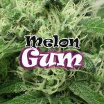 Melon Gum  ( 2 )