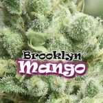 Brooklyn Mango