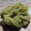 Brooklyn Mango ( bud )