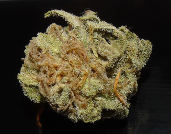 Brooklyn Mango ( dried bud )