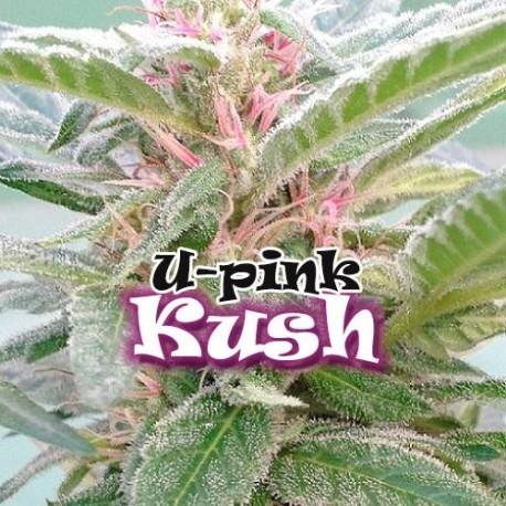 U- Pink Kush