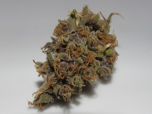 American-Beauty-Dried-bud-lq